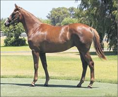 SNITZEL – NEW YORK CITI - Striking chestnut is a prize lot from Geisel Park