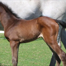 Full sister to Group 1 winner born in WA