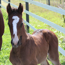 First foals by All American
