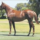Snitzel filly a star for Perth Magic Millions