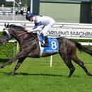 Yankee slam-dunk in Champagne Stakes