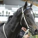 Zebulon zeroes in on Group 1 Goodwood